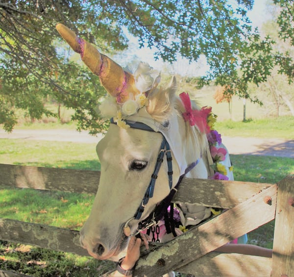 You can have your own unicorn pony party at Ashton Park