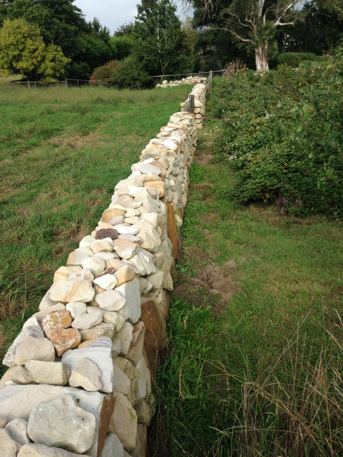 Ashton Park dry stone wall after removing wooden fence